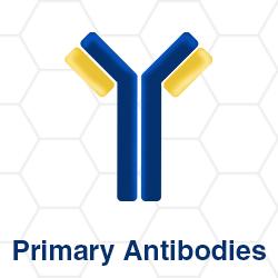 Primary antibody